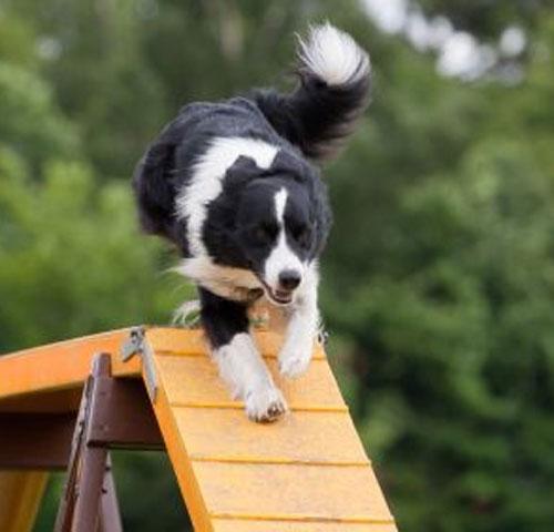 Výsledek obrázku pro rukáv na výcvik psa