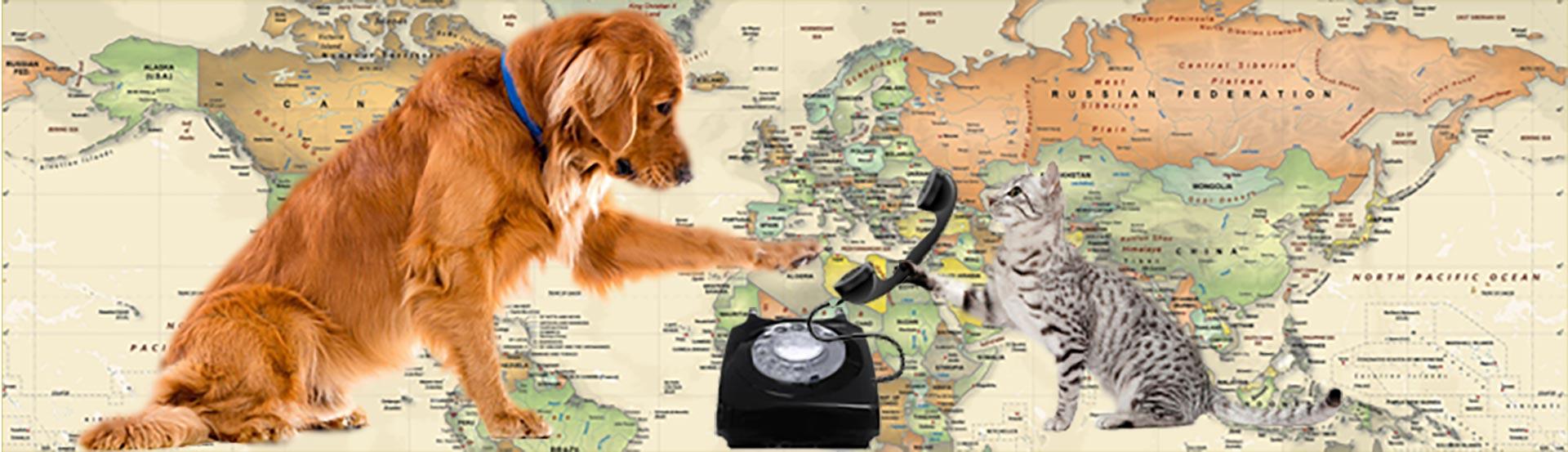 Kontakt psí centrum Kuřim