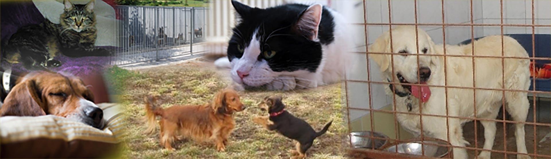 Ubytovaní psů a koček